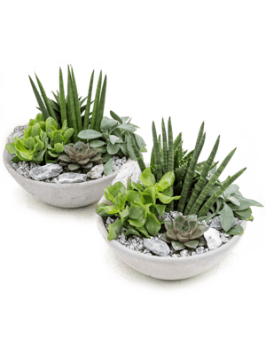 Arrangement Kakteen 2/tray