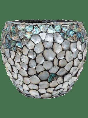 Oceana Pearl Abalone