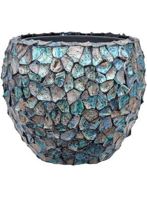 Oceana Abalone