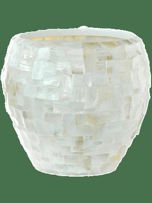 Oceana Pearl