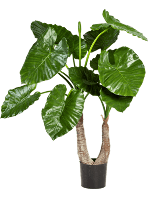 Alocasia calidora Toef - Artificial