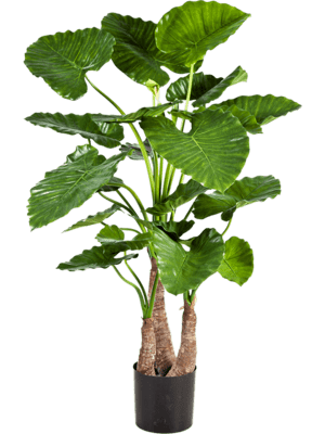 Alocasia calidora Tuft - Artificial