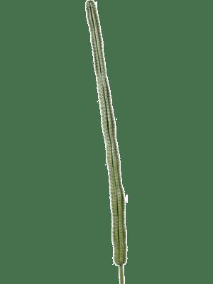 Cactus rio Tige - Artificial