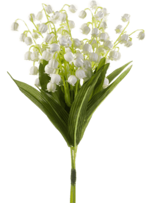 Lily of Vally