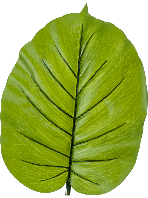 Alocasia Leaf - Artificial - Main image