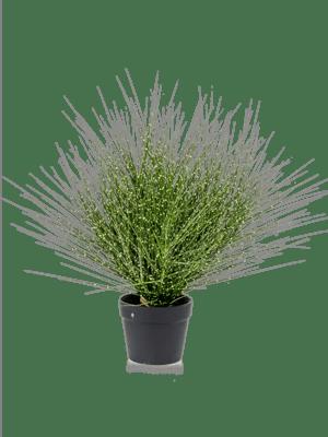 Grass zebra