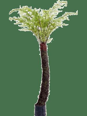 Forest fern Tree in plastic pot - Artificial