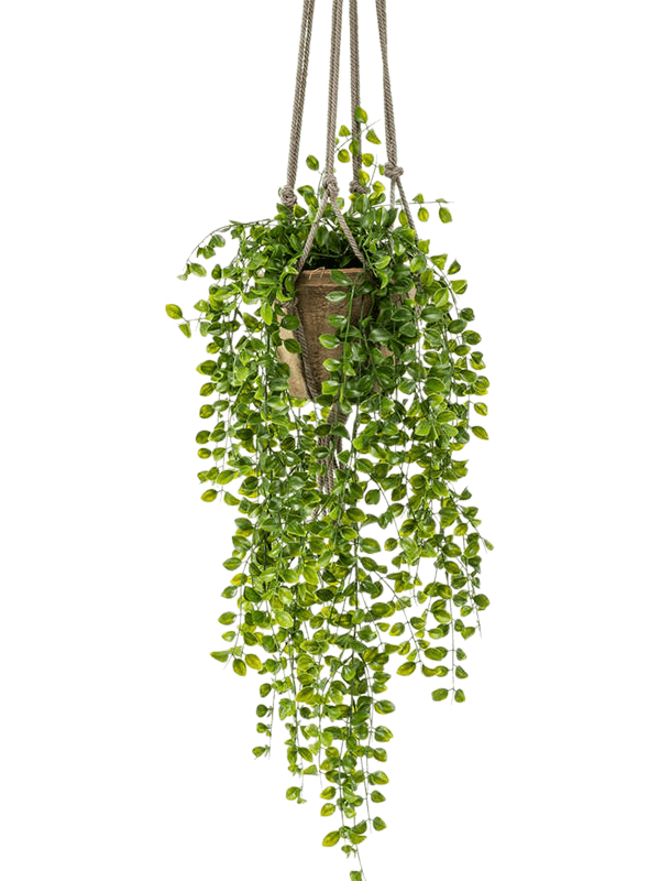 Ficus pumila Hanging Bush - Artificial - Main image