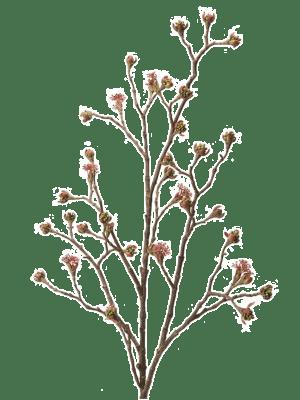 Acer branch