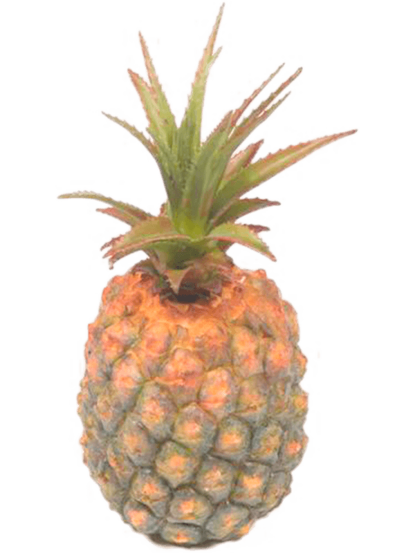 Pineapple - - Artificial - Main image