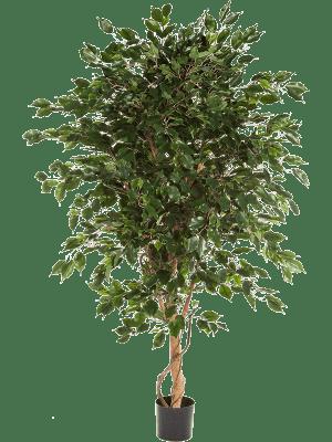 Ficus exotica Ball - Artificial