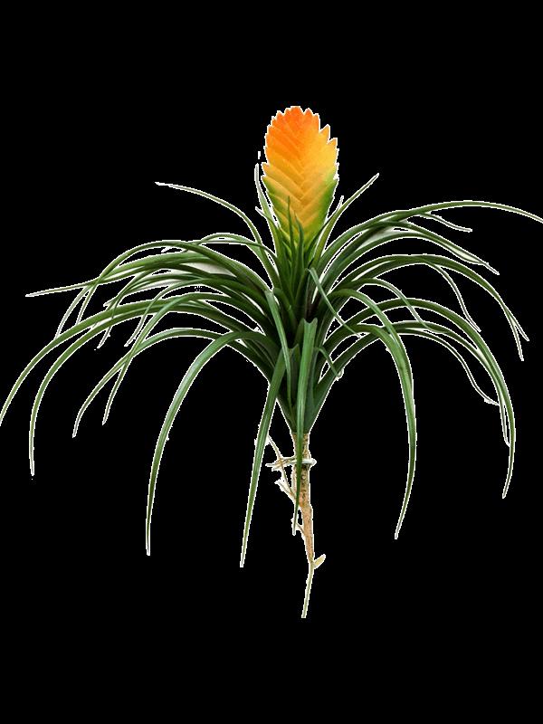 Bromelia vriesia Toef - Artificial - Main image