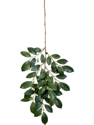 Bishako leaf spray