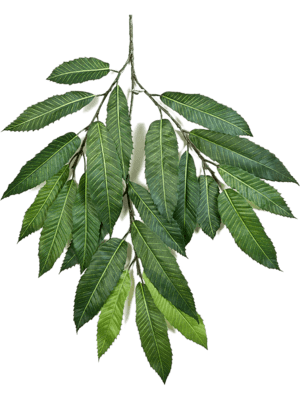 Chestnut leaf spray