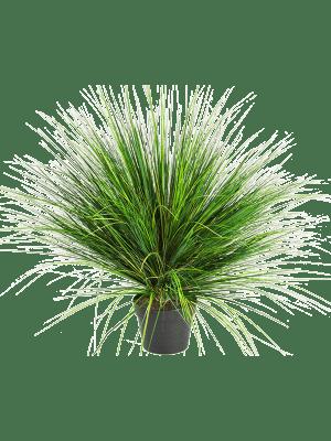Grass onion Touffe - Artificial