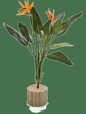 Strelitzia Buisson - Artificial