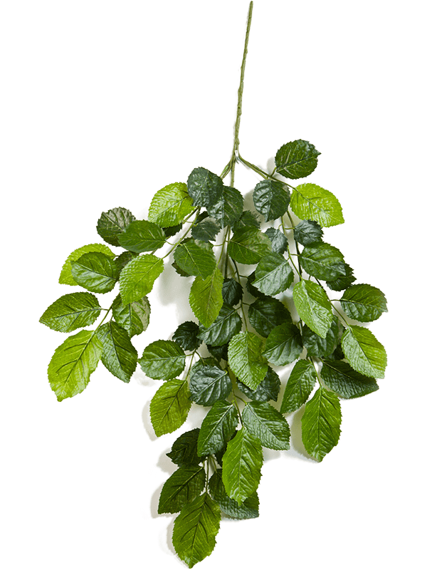 Beech Branche - Artificial - Main image