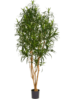 Dracaena anita Branched - Artificial