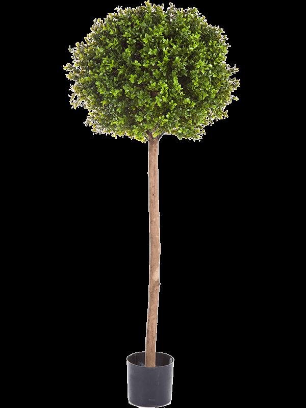Boxwood Ball - Artificial - Main image