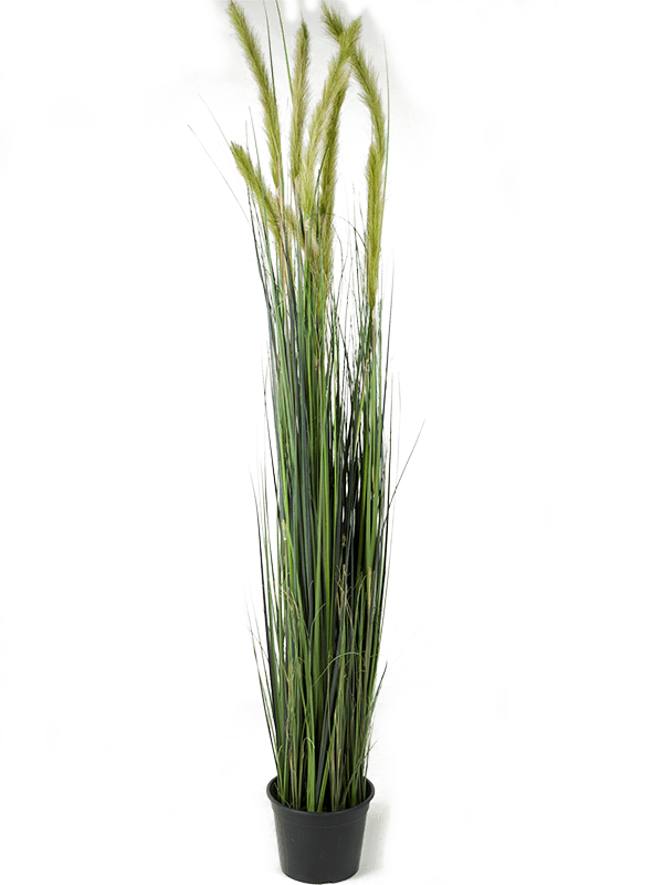 Grass foxtail Busch - Artificial - Main image