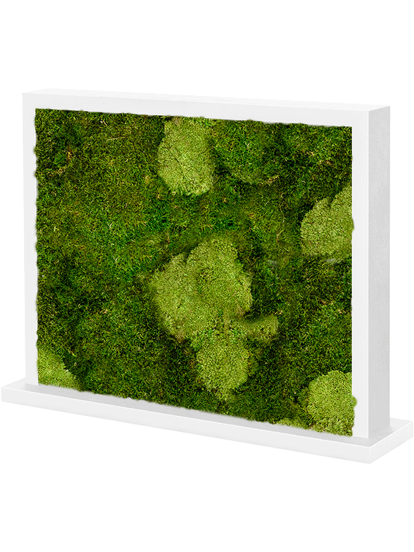 Moss divider MDF Two-sided white 30% ball moss natural and 70% flat moss - Mos - Main image