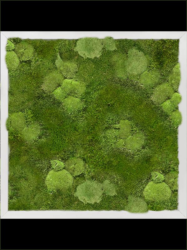 Moss painting Aluminum 30% Ball- and 70% Flat moss - Mos - Main image