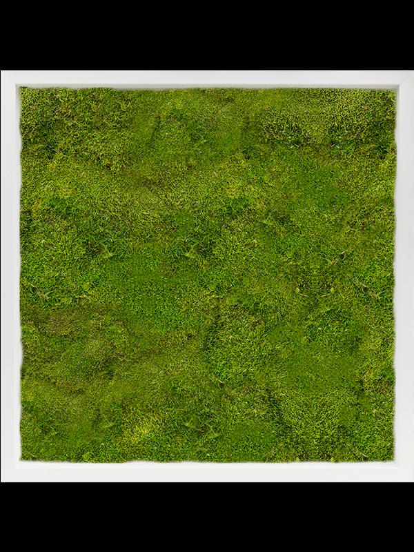 Mos Schilderij MDF RAL 9010 Zijdeglans 100% Platmos - Mos - Main image
