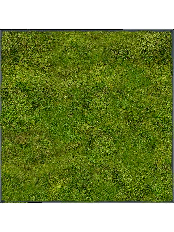 Moss Painting Stiel L Ral 7016 Matt 100% Flat Moss - Mos - Main image